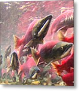 Salmon Run - Square - Painterly - 2013-0103 Metal Print by Wingsdomain Art and Photography