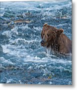 Salmon Salmon Everywhere Metal Print