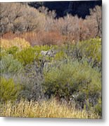 Salt River Spring Metal Print