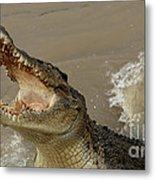 Salt Water Crocodile 2 Metal Print