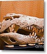 Salt Water Crocodile Skull Metal Print
