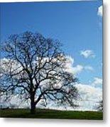 Same Tree Many Skies 11 Metal Print