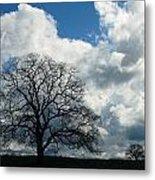 Same Tree Many Skies 13 Metal Print