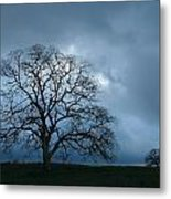 Same Tree Many Skies 14 Metal Print