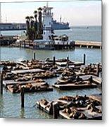 San Francisco Pier 39 Sea Lions 5d26102 Metal Print