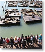 San Francisco Pier 39 Sea Lions 5d26111 Metal Print by Wingsdomain Art and Photography