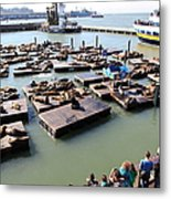 San Francisco Pier 39 Sea Lions 5d26116 Metal Print by Wingsdomain Art and Photography