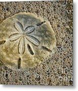 Sand Dollar 3 Botany Bay Metal Print