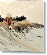 Sand Dunes At Penny Beach Metal Print