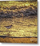 Sand Piper Metal Print by Marvin Spates