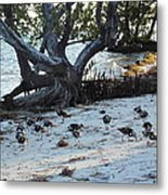 Sand Pipers At Beach Metal Print by Susan Sidorski