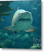 Sand Shark Metal Print