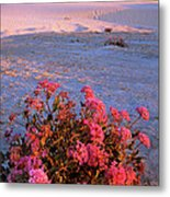 Sand Verbenas At Sunset White Sands National Monument Metal Print