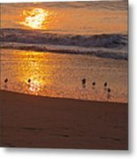 Sanderlings At Sunrise Metal Print