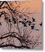 Sandhill Crane Across The Sky Metal Print