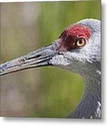 Sandhill Crane Grus Canadensis Metal Print