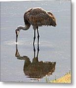 Sandhill Crane On Sparkling Pond Metal Print by Carol Groenen