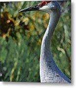 Sandhill Crane Profile Metal Print