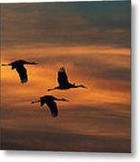 Sandhill Crane Sunset Metal Print