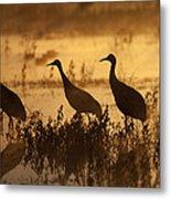 Sandhill Crane Trio At Sunrise Bosque Metal Print