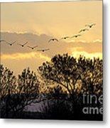 Sandhill Cranes Flying At Sunset Metal Print