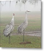 Sandhill Cranes In A Foggy Morning Metal Print