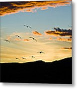 Sandhill Cranes In New Mexico Metal Print