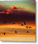 Sandhill Cranes Take The Sunset Flight Metal Print