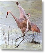 Sandhill Leap Of Faith Metal Print