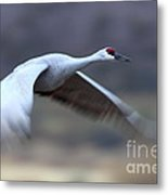 Sandhill Speeding By Metal Print
