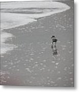 Sandpiper At Sunset Metal Print