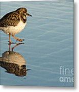 Sandpiper Bird Walking On Water Metal Print