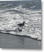 Sandpiper In The Surf Metal Print
