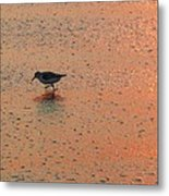 Sandpiper On Shoreline Metal Print