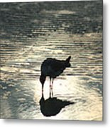 Sandpiper Reflection Metal Print