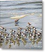 Sandpiper Reflections Metal Print