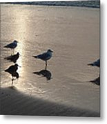 Sandpipers And Seagulls Metal Print