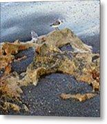 Sandpipers 1 Metal Print
