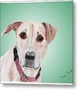 Sandy - A Former Shelter Sweetie Metal Print