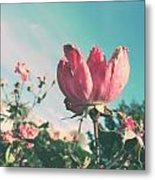 Sandy's Sea Rose Metal Print