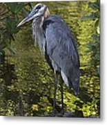 Sanibel Great Blue Heron Metal Print