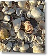 Sanibel Island Shells 3 Metal Print