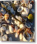 Sanibel Island Shells 4 Metal Print