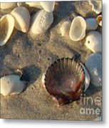 Sanibel Island Shells 5 Metal Print