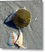 Sanibel Sand Dollar 1 Metal Print