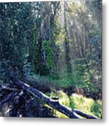 Santa Barbara Eucalyptus Forest II Metal Print