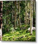 Santa Fe Aspen Woodland Forest Metal Print