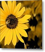 Santa Fe Sunflower 1 Metal Print