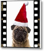 Santa Pug - Canine Christmas Metal Print by Edward Fielding