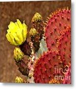 Santa Rita Cactus Metal Print